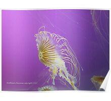 Japanese Sea Nettle Poster