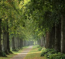 Avenue of trees by Judi Lion