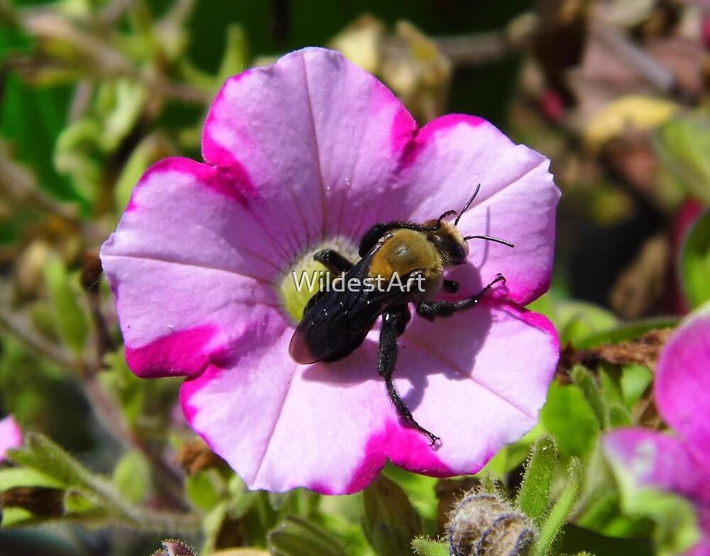 Bee On Petunia by WildestArt