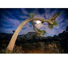 Joshua Tree Moon Landscape Photographic Print