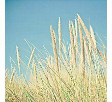 Beach Grass Photographic Print
