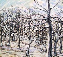 Beech wood in snow by Yorkspalette