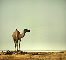 The Ship of the Desert by Larry Lingard-Davis