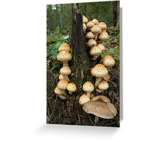 Fountain of Fungi Greeting Card