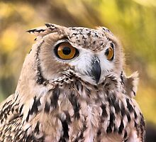The Eyes of a Desert Raptor ( 2 ) by Larry Lingard-Davis