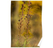 American Goldfinch Eating Seeds Poster