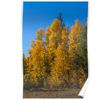 Autumn Trees - Sierras  Poster