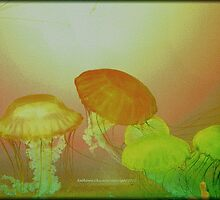 Pacific Sea Nettles by Kathie  Chicoine
