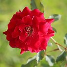 Don Juan Flower by Bob Hardy