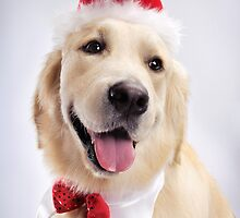 Cute Golden Retriever Wearing Santa Hat art photo print by ArtNudePhotos