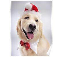 Cute Golden Retriever Wearing Santa Hat art photo print Poster