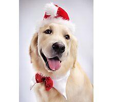 Cute Golden Retriever Wearing Santa Hat art photo print Photographic Print
