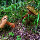 We Just Fell Over ~ Mushrooms ~ by Charles & Patricia   Harkins ~ Picture Oregon