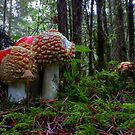 Thats Just The Way We Are ~ Mushrooms ~ by Charles & Patricia   Harkins ~ Picture Oregon