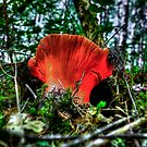 We All May Change ~ Mushrooms ~ by Charles & Patricia   Harkins ~ Picture Oregon