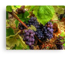 We Bunch Up ~ Grapes ~ Canvas Print
