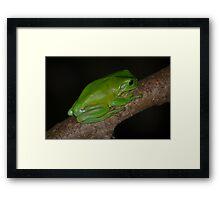 Australian Green Tree Frog Framed Print