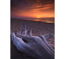 Driftwood on a shore of lake Huron sunset scenery art photo print Photographic Print