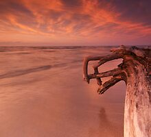Dramatic sunset nature scenery of driftwood on a shore art photo print by ArtNudePhotos