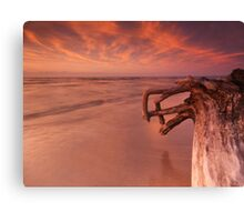 Dramatic sunset nature scenery of driftwood on a shore art photo print Canvas Print