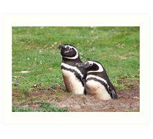 Magellanic Penguin Pair in Their Nesting Burrow Art Print