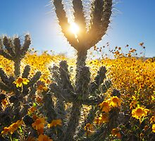 Sun Surround by Bob Larson