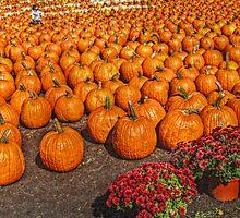 It's A Sea of Pumpkins by Jane Neill-Hancock