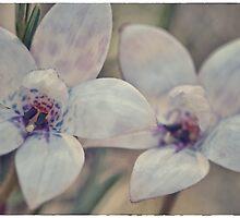 Albino purple enamel orchid by Paul Amyes