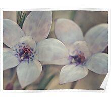 Albino purple enamel orchid Poster