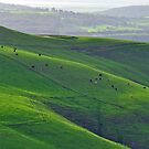Emerald Hills in Gippsland by S T