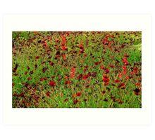 Hamburg. Poppies at the International Garden Show Art Print