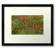 Hamburg. Poppies at the International Garden Show Framed Print
