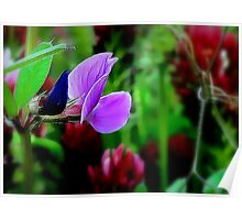 Wild Sweetpea Tying Up Clover Poster
