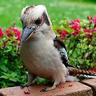 Kookaburra visiting by Bev Pascoe