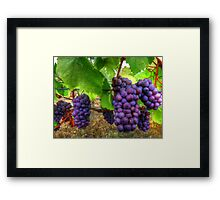 I Be Grape ~ Grapes ~ Framed Print