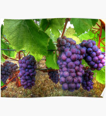 I Be Grape ~ Grapes ~ Poster
