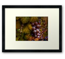 A Closer Look ~ Grapes ~ Framed Print
