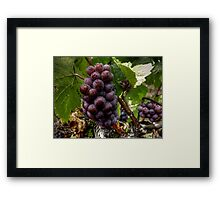 We Group Up ~ Grapes ~ Framed Print