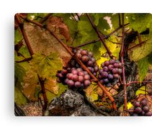 The Look Of Love ~ Grapes ~ Canvas Print