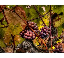 The Look Of Love ~ Grapes ~ Photographic Print