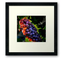 Just Another Bunch ~ Grapes ~ Framed Print