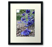 Garden Blooms Framed Print
