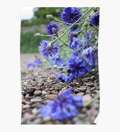 Garden Blooms Poster