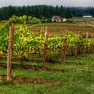 House On The Hill ~ Grape Vineyard ~ by Charles & Patricia   Harkins ~ Picture Oregon