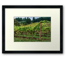 It's Where We Live ~ Vinyard Grapes ~ Framed Print