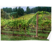 It's Where We Live ~ Vinyard Grapes ~ Poster