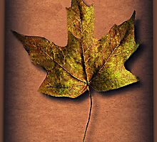 ❦ ❧ FALLEN LEAF A SIGN OF FALL ❦ ❧ by ✿✿ Bonita ✿✿ ђєℓℓσ