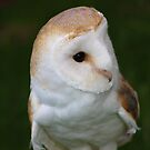White Owl by ejrphotography