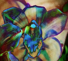 4440 Psychedelic Orchid by AnkhaDesh