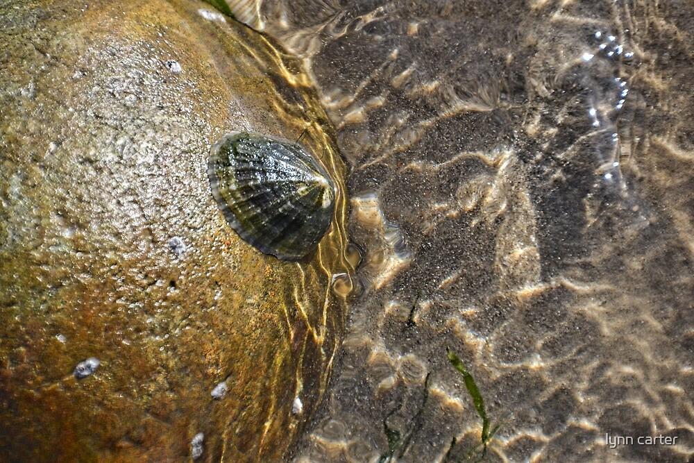 Sea-Life, Charmouth,Dorset,UK by lynn carter